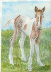Baby_paint_horse_1