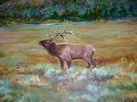 Elk22_1
